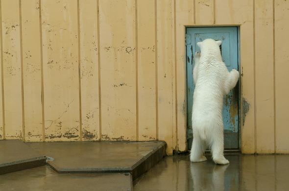 釧路市動物園